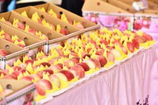 拉拉山水蜜桃,不僅多汁、口感好、營養豐富,是夏季最好的水果。