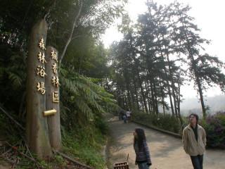 圖說:東勢林場中的森林浴健康步道,是許多大小朋友夏季最愛的避暑勝地。(記者黃玿琮攝)