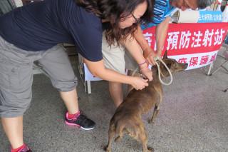 台南市動保處7月起至11月底在偏鄉及山區辦理免費狂犬病巡迴預防注家中犬貓。