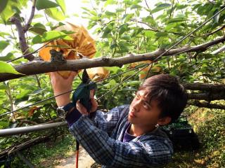 台大學生林永城,堅信台灣農業有前途,不顧父母反對,就讀園藝系 ,準備畢業後返鄉務農,有信心「把不賺錢的農作物、改變成最有價  值產物」。(記者陳榮昌攝)