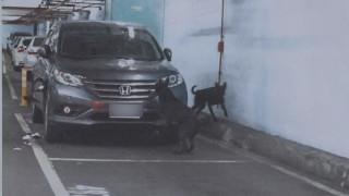 停車遭狗啃維修費逾10萬 停車場拒賠
