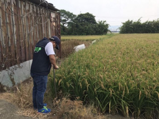 稽查人員前往種稻農地進行土壤採樣化驗 。