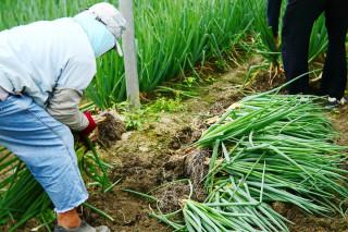 中颱「尼莎」即將侵台 農改場呼籲農友儘速進行防颱準備