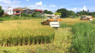 桃園市政府為避免農民搶收滲眉埤周邊具污染風險之稻作,啟動預防性剷除銷燬機制。