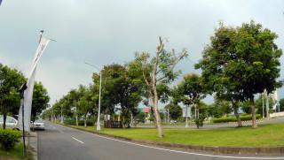 尼莎颱風來襲預防性路樹修剪
