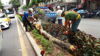 尼莎颱風一晚的強風肆虐下,造成市區多處樹倒情形,北市工務局全力動員進行救災。