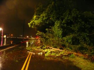 大里仁堤路樹倒。林重鎣攝