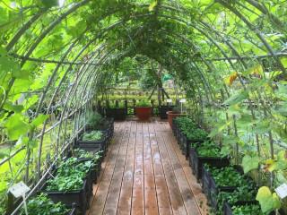 推動可食地景營造,仁愛公園有蔬菜綠廊隧道及多種不同種類的果樹。(圖/記者黃村杉攝)