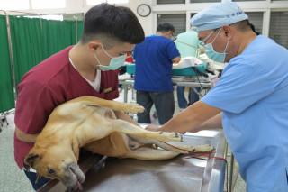 台南市動保處防疫人員為毛小孩結紮。(圖/動保處提供)