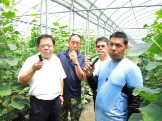 溪州青農企業化經營 小黃瓜也能賺進百萬年薪