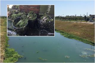 冬山河義成橋附近水域大量魚群暴斃。(圖/宜蘭縣政府環保局提供)