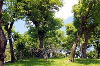 民眾在大樹下乘涼消暑。(圖/記者陳木隆攝)
