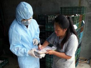 毒蛋風波竄燒 屏縣緊急動員採樣檢測雞蛋芬普尼