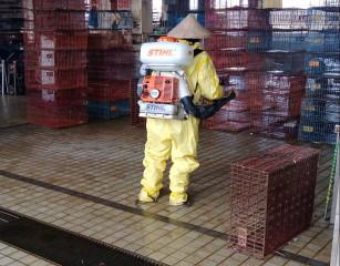 19日凌晨台北市家禽批發市場屠檢獸醫師通報疑似案例,送檢確診為H5N2亞型禽流感病毒。動保處已將當日凍存稽留之同批7件屠體判定廢棄,並全數化製銷毀,以防堵H5N2病毒擴散。(圖/台北市動保處)
