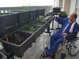 光田綜合醫院成立大甲區「仁馨樂活園區」,打造輪椅族也能種植的  小菜園,讓因中風行動不便的長輩也能享受種菜樂趣。(記者陳榮昌 攝)