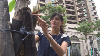 蘆洲路樹有身分證 兼具防災.教育功能