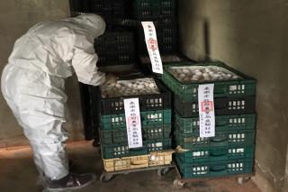 動保處防疫人員今晚再封存檢出芬普尼雞蛋 共28400 顆。
