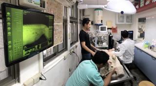 動保處專業獸醫師謝侑達幫毛隊員辦理血液、寄生蟲及腹腔超音波檢查。(圖/記者黃村杉攝)