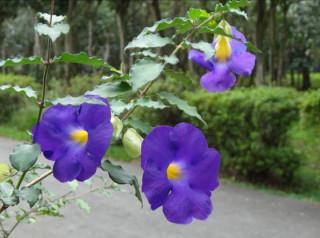 包括立鶴花等多種紫色花系,近日開遍位於台北市陽明山的花卉試驗中心的園區範圍。(圖/台北市政府工務局公園處)