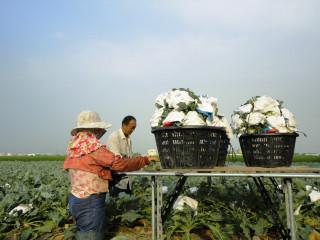 颱風「泰利」影響全臺 中區改場呼籲農友儘速進行防颱準備