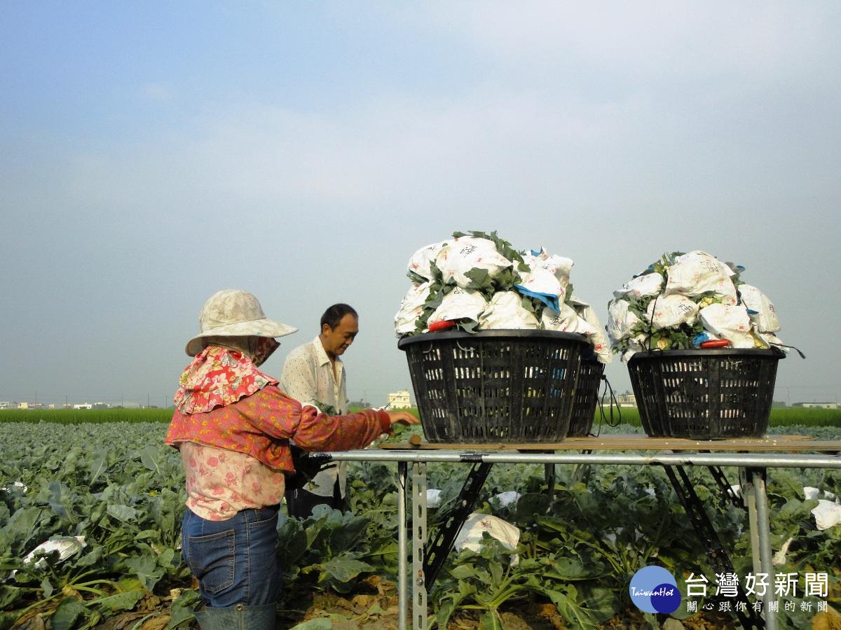 颱風「泰利」影響全台 中區改場呼籲農友儘速進行防颱準備