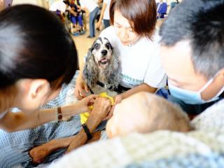 仁馨樂活園區長輩昨日高興的與治療犬互動,稱讚狗狗「古錐喔」。(記者陳榮昌攝)