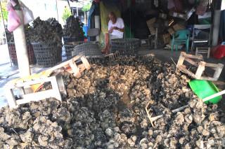 蚵村的人聽到颱風來襲,可以活動的蚵民就趕緊出海搶收蚵仔,數百斤重的鮮蚵堆放在蚵寮,留下老年人在家顧蚵仔。(圖/記者黃芳祿攝)