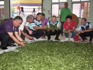 將經驗傳承下一代 苗縣舉辦東方美人茶製茶技術競賽
