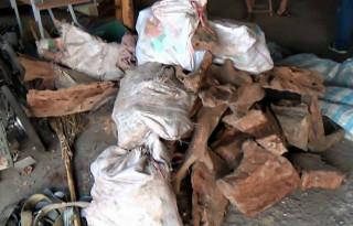 南投檢警林務人員在竹山鎮破獲大批牛樟木。( 南投地檢署提供)