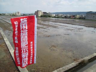 南投環保局在草屯示範使用益菌肥替代露天燃燒稻草有成效。