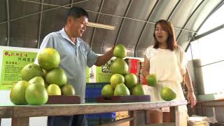 1060915柚子產季來臨 休閒農場有吃有玩
