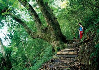 熱心山友主動維護聖母登山步道環境 。(圖/羅東林管處提供)