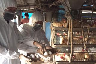 台南沿海將軍區蛋雞養殖場被檢驗出雞蛋含芬普尼,20200 顆雞蛋已由農業局畜產科在今(18)日上午送堆肥場完成銷毀。