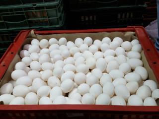 台北市衛生局18日表示,8月底開始進行的「雞蛋驗出芬普尼」專案查核中,永吉蛋行第2次被驗出販賣的蛋品含有芬普尼10ppb(標準:不得檢出,定量極限5ppb ),蛋品來源則是台南市振崑畜牧場。(圖/台北市衛生局)