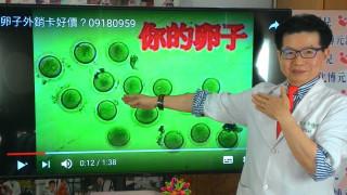 台灣借卵試管成功率高 「卵實力」竟也外銷國外