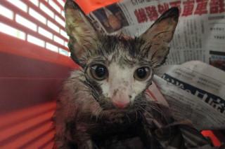 身陷排油煙管幼貓被救出時滿身油汙、一臉驚魂未定。(圖/台南市動保處提供)