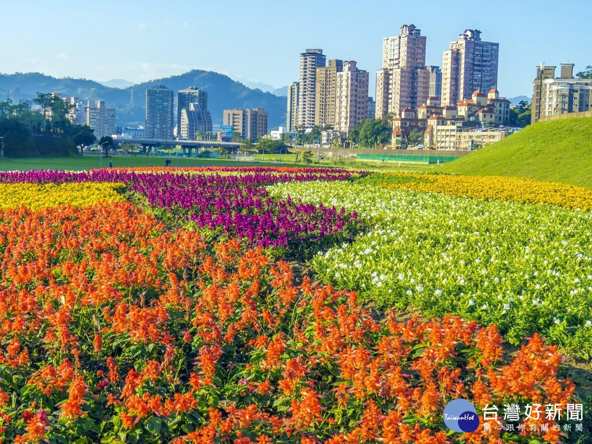 赏花不必人挤人 北市道南河滨11万盆童趣花海缤纷绽放中
