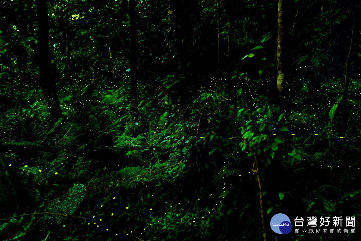 苗栗山城「螢」光熠熠 一起尋訪夜光精靈