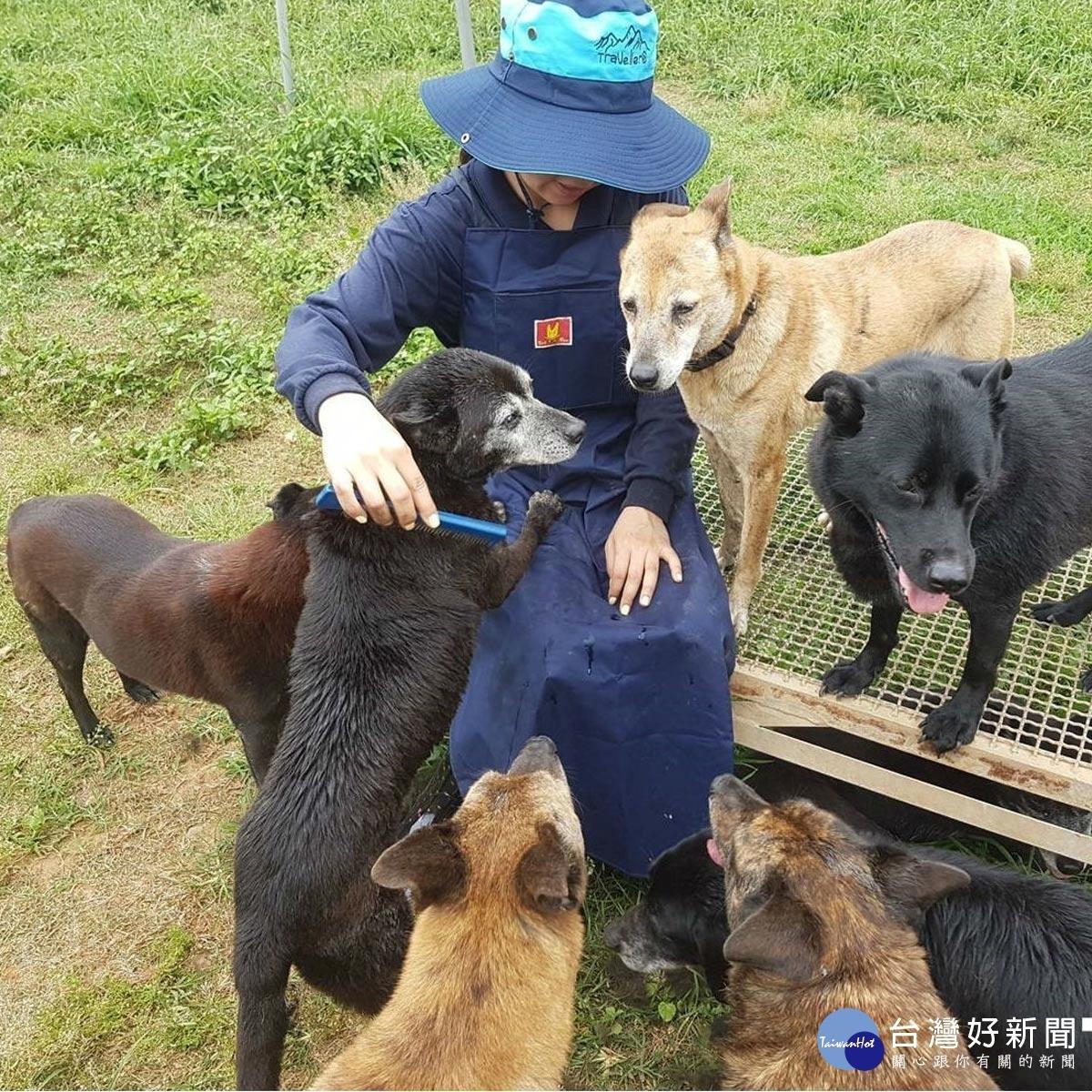 拯救台灣10萬隻流浪犬 助糧平台呼籲一起支持龐大的飼料挑戰
