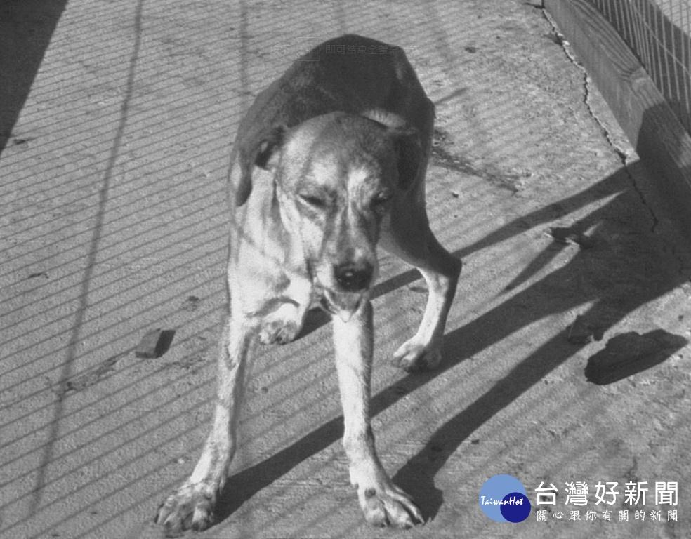 狂犬病陽性反應動物增多 野外活動少摸野生動物