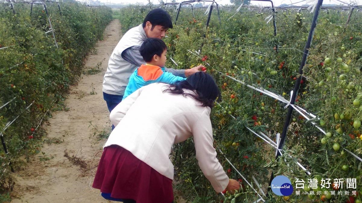 路竹鹽地番茄獲得廣大民眾喜愛。(圖/記者郭文君攝)