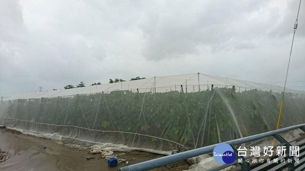 梅雨鋒面恐有強降雨, 高雄農產加強戒備。