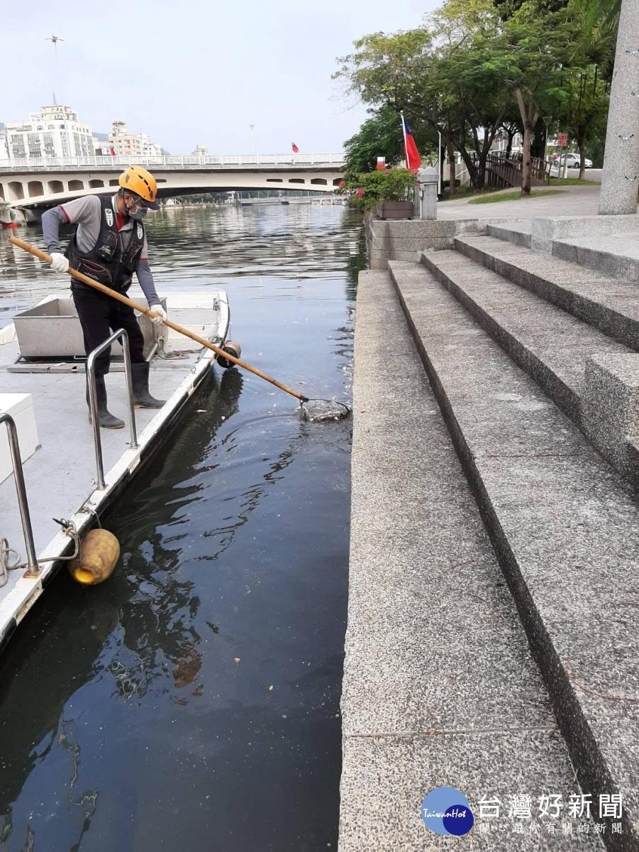 高雄愛河中都紅橋以南出現大量死魚,環保局清潔人員打撈魚屍。