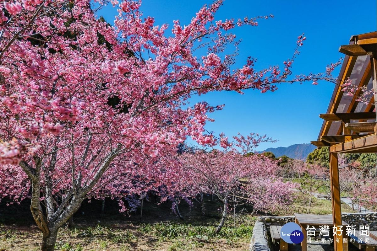 春暖花開遊參山 脫下口罩呼吸新鮮芬多精