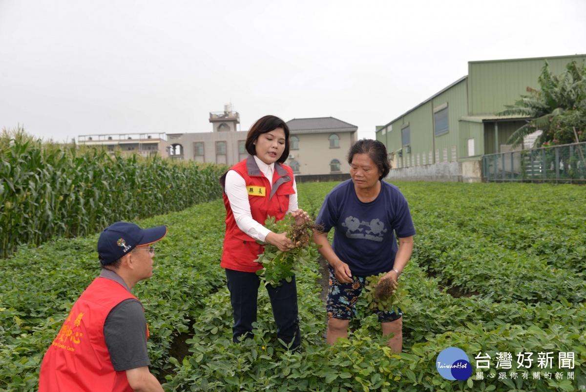 玉米倒伏受損嚴重 張麗善建請中央速公告納入天然災害救助