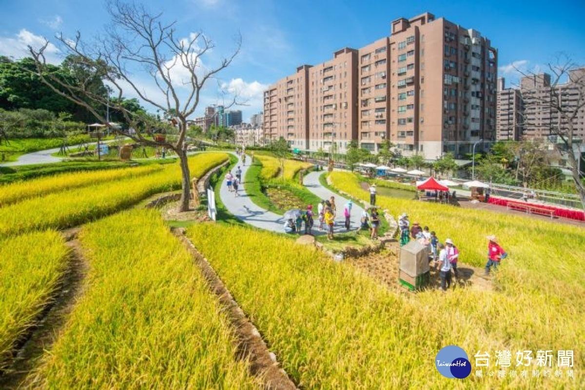 全台首座梯田生態公園 把農村搬進都市