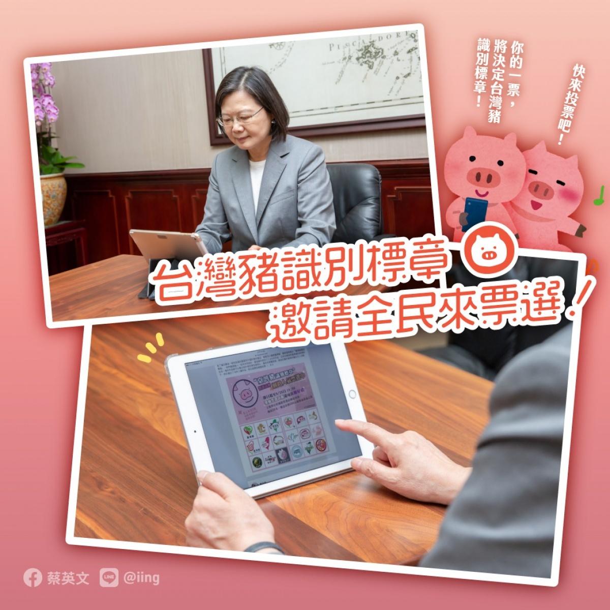 邀全民票選「台灣豬識別標章」 蔡英文:台灣豬不怕競爭