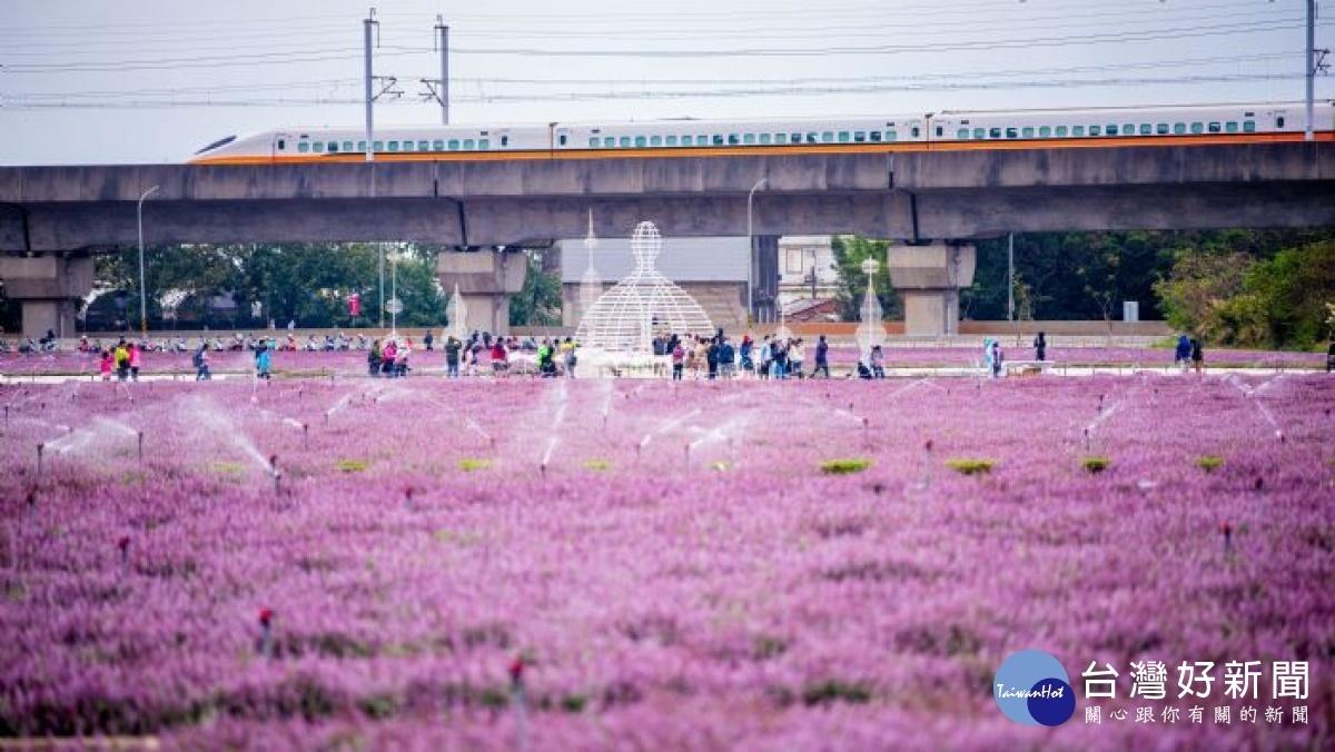 紫色風暴桃園仙草花節 開幕當周25萬人朝聖