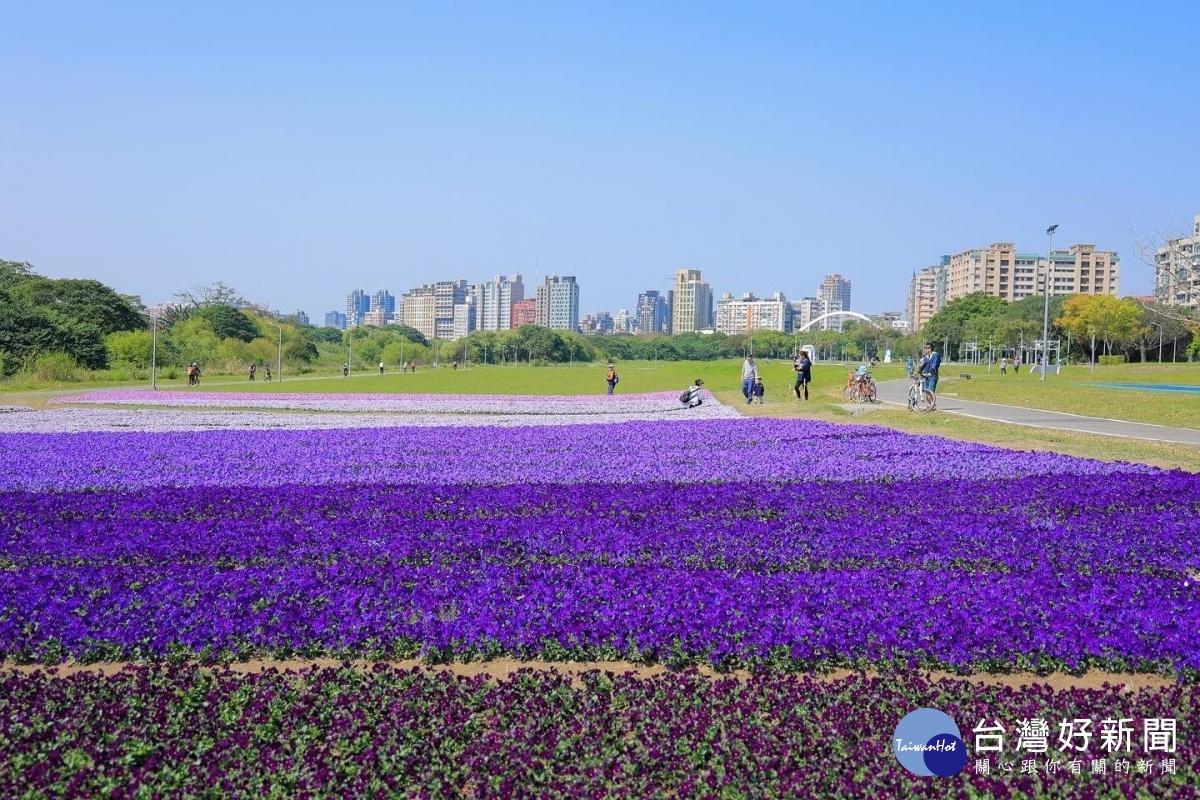 台北「紫爆」! 民眾搶拍打卡瘋傳社群?