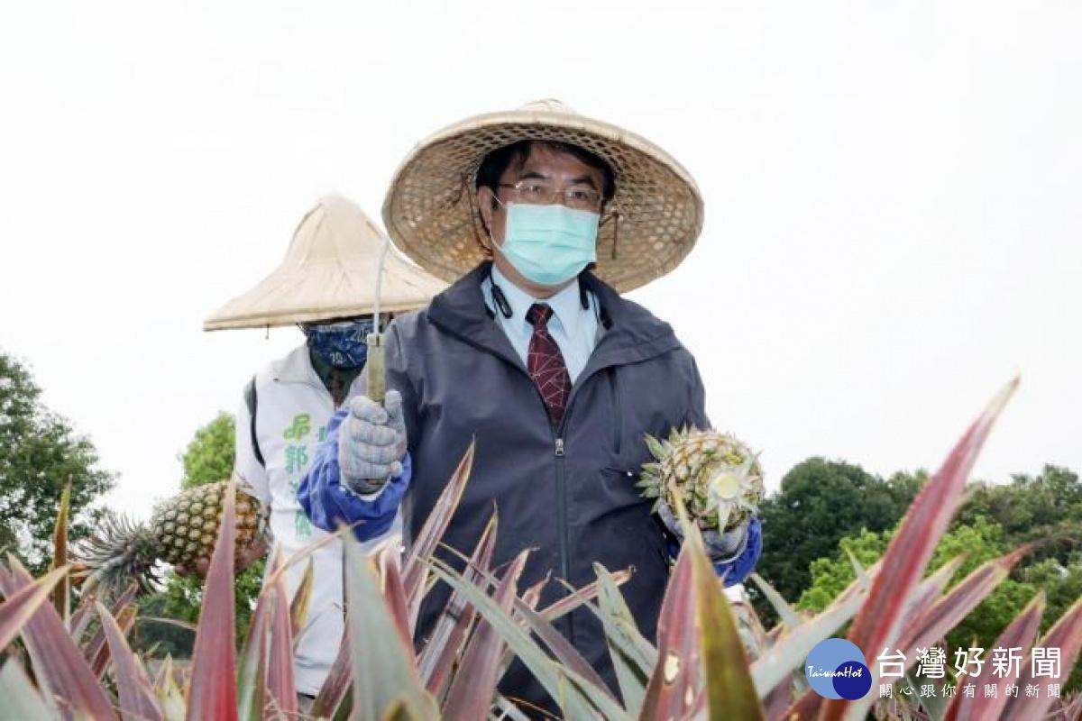 中國禁止進口台灣鳳梨 黃偉哲:南市府全力協助農民